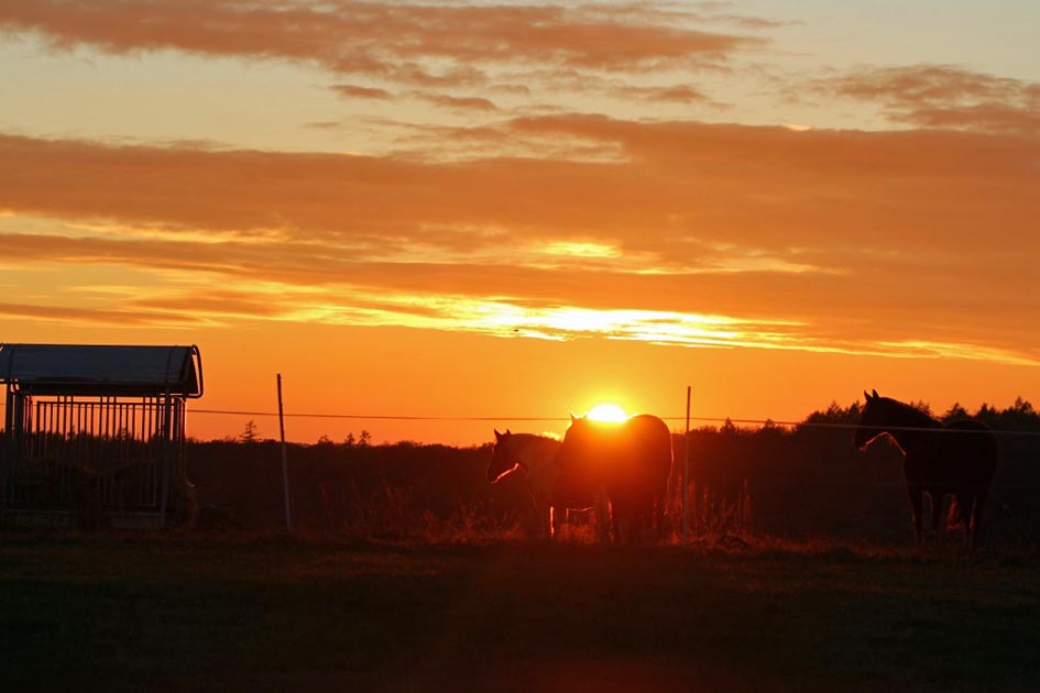 Sonnenuntergang_Winden